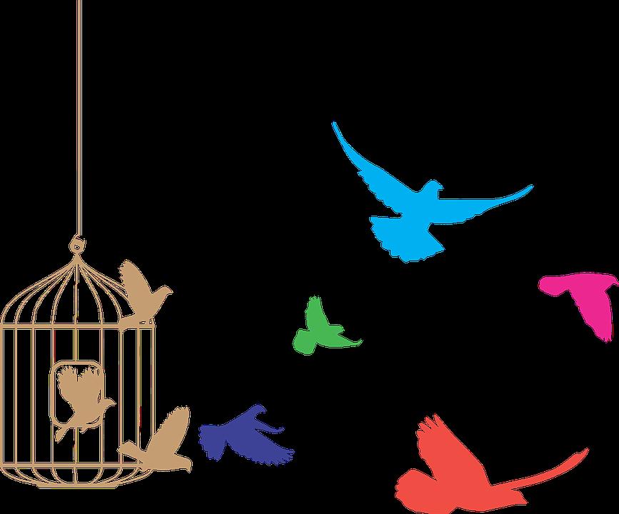 freedom-birds-2012427_960_720
